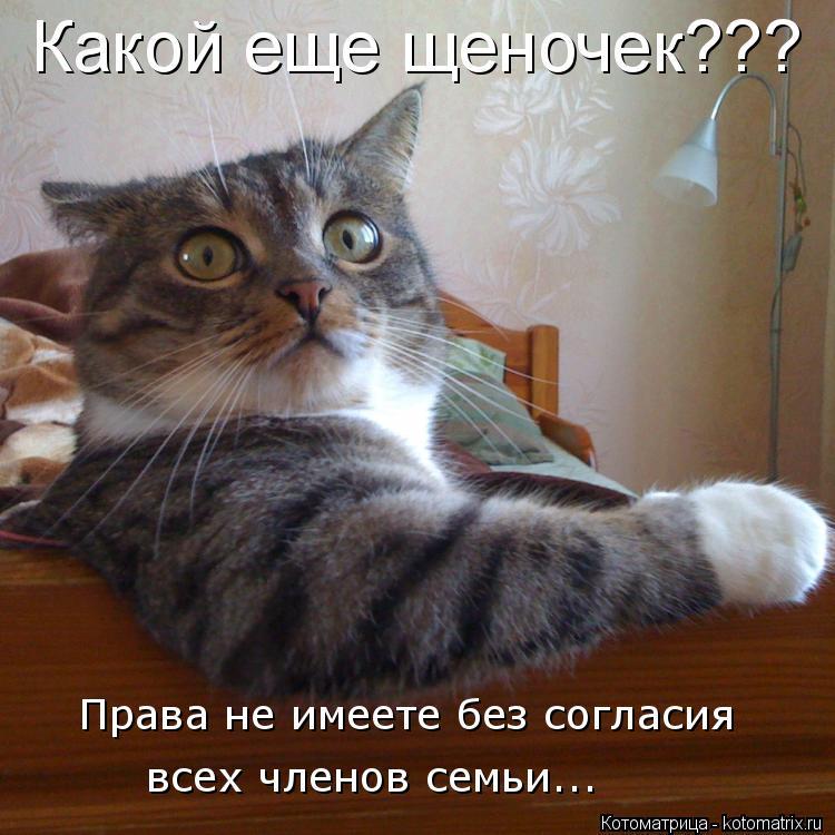 Котоматрица: Какой еще щеночек??? Права не имеете без согласия  всех членов семьи...