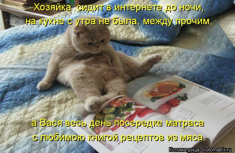 Котоматрица: на кухне с утра не была, между прочим, Хозяйка  сидит в интернете до ночи, а Вася весь день посередке матраса с любимою книгой рецептов из мяс