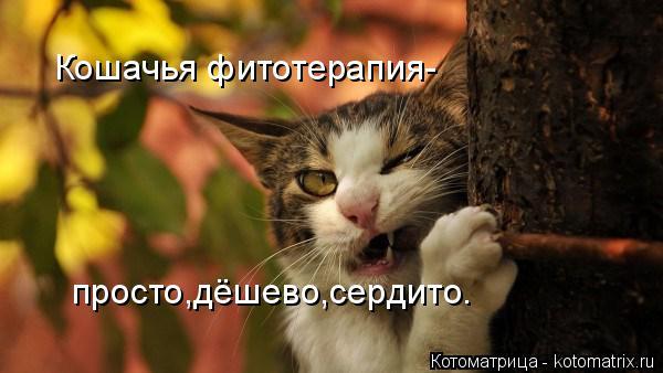 Котоматрица: Кошачья фитотерапия- просто,дёшево,сердито.