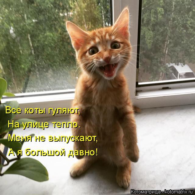 Котоматрица: Все коты гуляют,  На улице тепло. Меня не выпускают, А я большой давно!