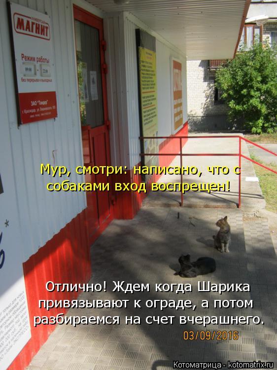 Котоматрица: Мур, смотри: написано, что с собаками вход воспрещен! Отлично! Ждем когда Шарика привязывают к ограде, а потом разбираемся на счет вчерашнег