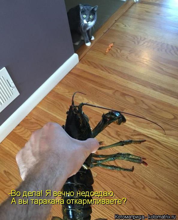 Котоматрица: -Во дела! Я вечно недоедаю,  А вы таракана откармливаете?