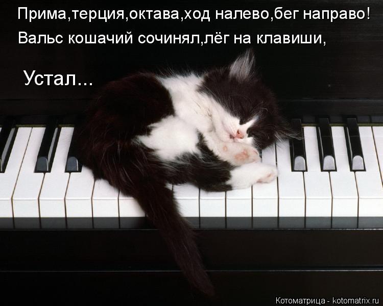 Котоматрица: Прима,терция,октава,ход налево,бег направо! Вальс кошачий сочинял,лёг на клавиши, Устал...