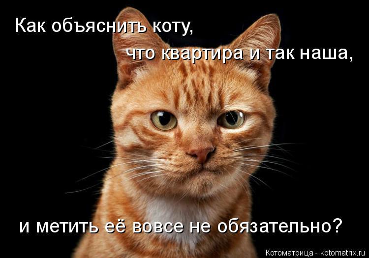 Котоматрица: и метить её вовсе не обязательно? Как объяснить коту,  что квартира и так наша,