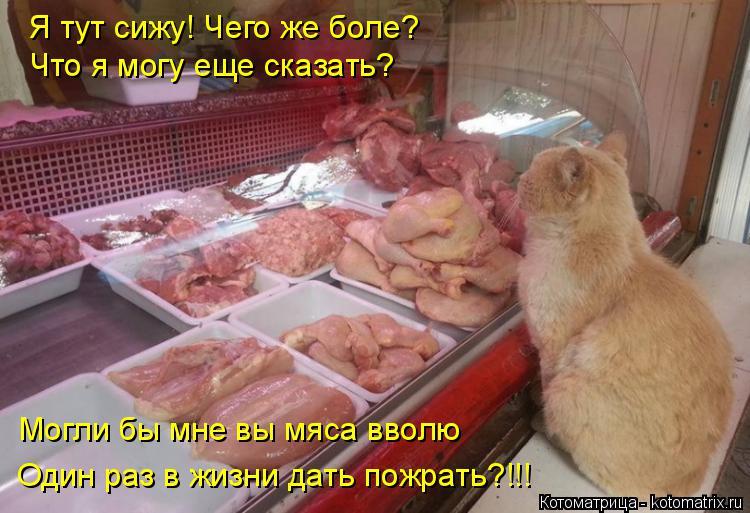 Котоматрица: Я тут сижу! Чего же боле?  Что я могу еще сказать? Могли бы мне вы мяса вволю Один раз в жизни дать пожрать?!!!