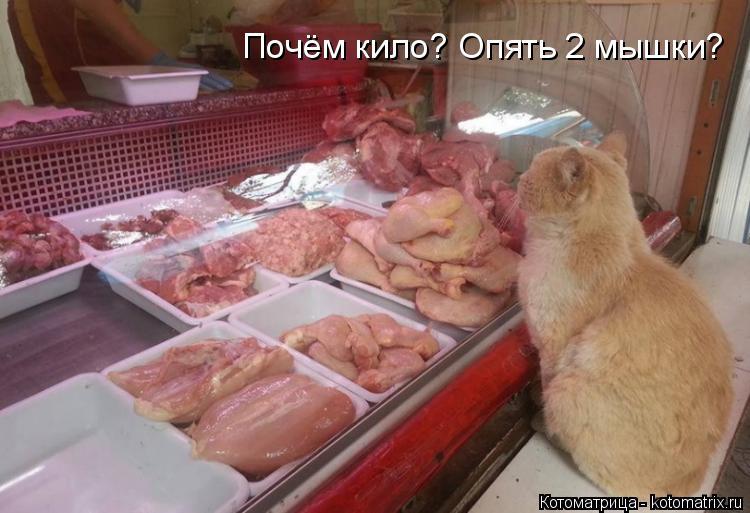 Котоматрица: Почём кило? Опять 2 мышки?
