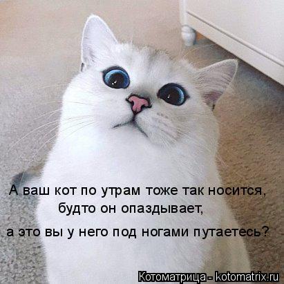 Котоматрица: А ваш кот по утрам тоже так носится,  будто он опаздывает,  а это вы у него под ногами путаетесь?
