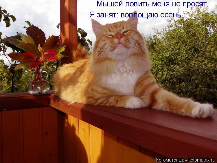 Котоматрица: Мышей ловить меня не просят, Я занят: воплощаю осень