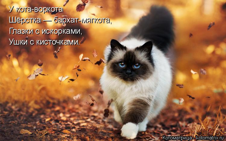 Котоматрица: У кота-воркота Шёрстка — бархат-мягкота, Глазки с искорками, Ушки с кисточками.