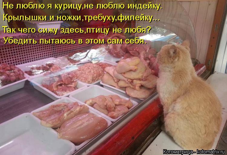 Котоматрица: Не люблю я курицу,не люблю индейку. Крылышки и ножки,требуху,филейку... Убедить пытаюсь в этом сам себя. Так чего сижу здесь,птицу не любя?
