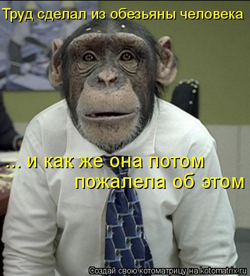 Котоматрица: пожалела об этом ... и как же она потом Труд сделал из обезьяны человека
