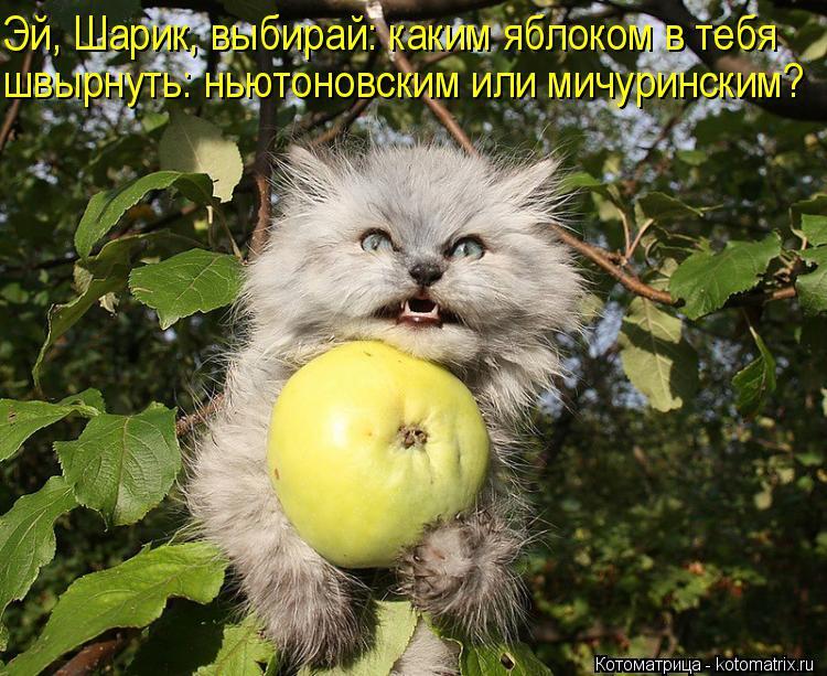 Котоматрица: Эй, Шарик, выбирай: каким яблоком в тебя  швырнуть: ньютоновским или мичуринским?