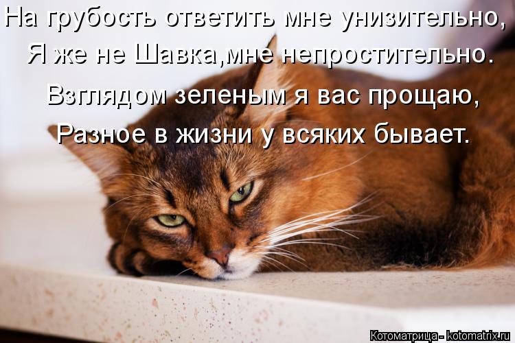 Котоматрица: Я же не Шавка,мне непростительно. На грубость ответить мне унизительно, Взглядом зеленым я вас прощаю, Разное в жизни у всяких бывает.