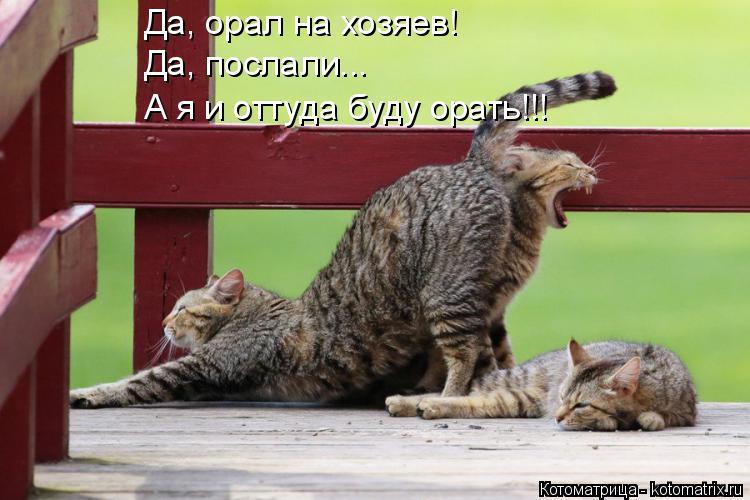 Котоматрица: Да, орал на хозяев! Да, послали... А я и оттуда буду орать!!!