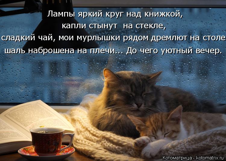 Котоматрица: шаль наброшена на плечи... До чего уютный вечер. Лампы яркий круг над книжкой, капли стынут  на стекле, сладкий чай, мои мурлышки рядом дремлю