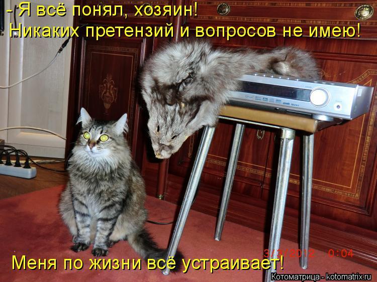 Котоматрица: - Я всё понял, хозяин! Никаких претензий и вопросов не имею! Меня по жизни всё устраивает!