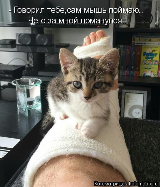 Котоматрица: - Говорил тебе,сам мышь поймаю.. Чего за мной ломанулся...