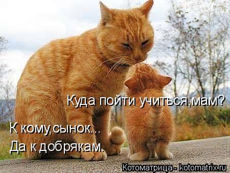 Котоматрица: Куда пойти учиться,мам? К кому,сынок... К кому,сынок... Да к добрякам.