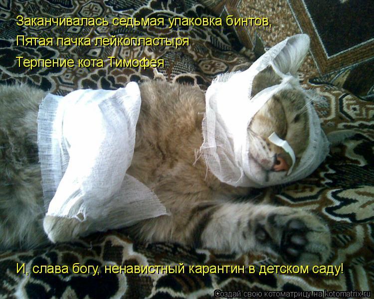 Котоматрица: Заканчивалась седьмая упаковка бинтов, Пятая пачка лейкопластыря Терпение кота Тимофея И, слава богу, ненавистный карантин в детском саду!