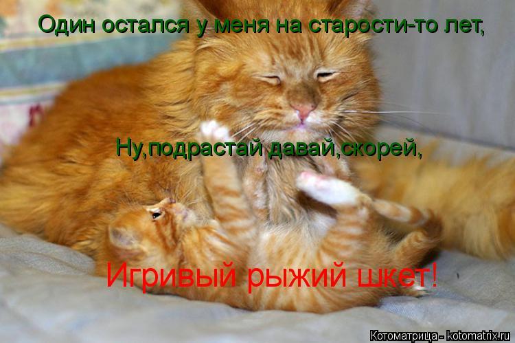 Котоматрица: Один остался у меня на старости-то лет, Ну,подрастай давай,скорей, Игривый рыжий шкет!