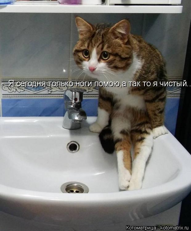 Котоматрица: -  Я сегодня только ноги помою,а так то я чистый...