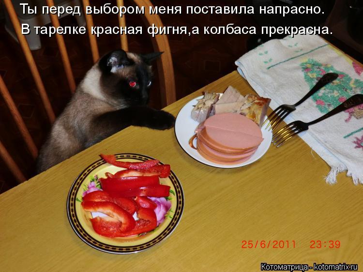 Котоматрица: Ты перед выбором меня поставила напрасно. В тарелке красная фигня,а колбаса прекрасна.