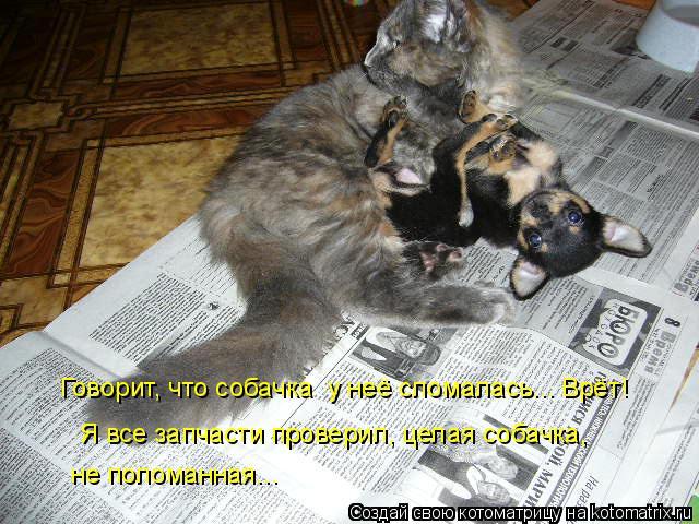 Котоматрица: Говорит, что собачка  у неё сломалась... Врёт! Я все запчасти проверил, целая собачка,  не поломанная...