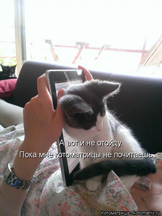 Котоматрица: - А вот и не отойду, Пока мне котоматрицы не почитаешь..