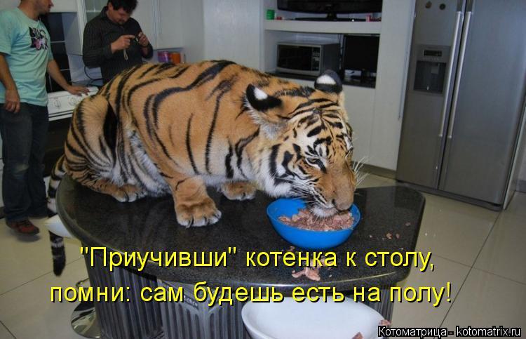 """Котоматрица: """"Приучивши"""" котенка к столу, помни: сам будешь есть на полу!"""