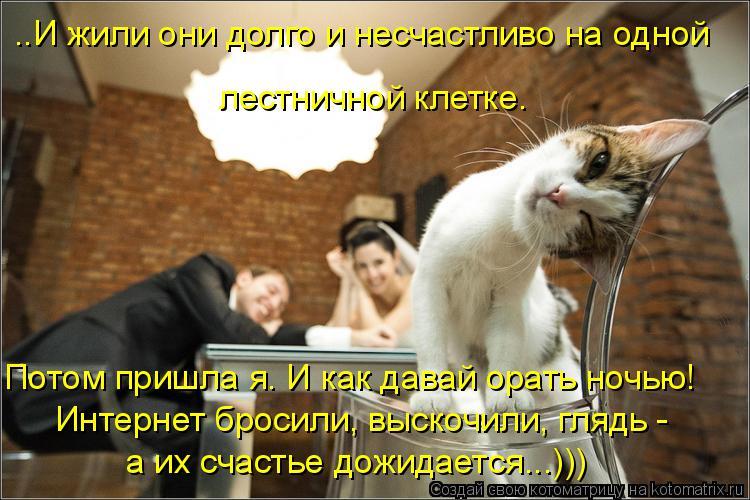 Котоматрица: ..И жили они долго и несчастливо на одной  лестничной клетке. Интернет бросили, выскочили, глядь -  а их счастье дожидается...))) Потом пришла я.