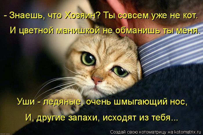 Котоматрица: - Знаешь, что Хозяин? Ты совсем уже не кот. И цветной манишкой не обманишь ты меня. Уши - ледяные, очень шмыгающий нос, И, другие запахи, исходят