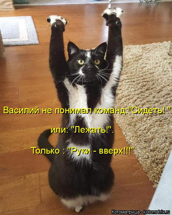 """Котоматрица: Василий не понимал команд:""""Сидеть! """" Только : """"Руки - вверх!!!""""  или: """"Лежать!""""."""