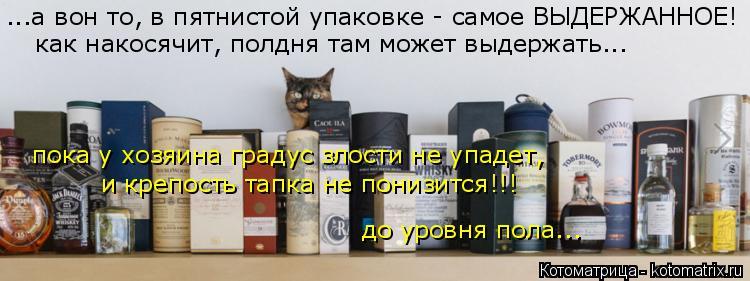Котоматрица: ...а вон то, в пятнистой упаковке - самое ВЫДЕРЖАННОЕ! как накосячит, полдня там может выдержать... пока у хозяина градус злости не упадет, до у