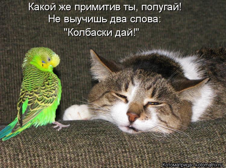 """Котоматрица: Какой же примитив ты, попугай! Не выучишь два слова: """"Колбаски дай!"""""""