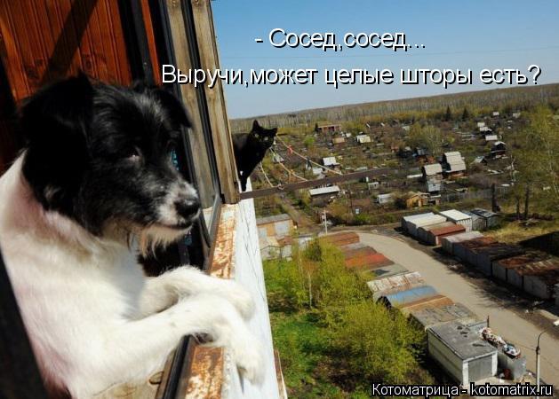 Котоматрица: Выручи,может целые шторы есть? - Сосед,сосед...