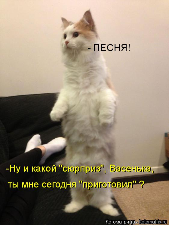"""Котоматрица: -Ну и какой """"сюрприз"""", Васенька,  ты мне сегодня """"приготовил"""" ? - ПЕСНЯ!"""