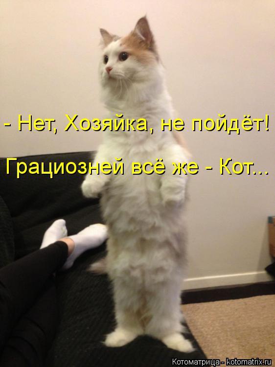 Котоматрица: - Нет, Хозяйка, не пойдёт! Грациозней всё же - Кот...