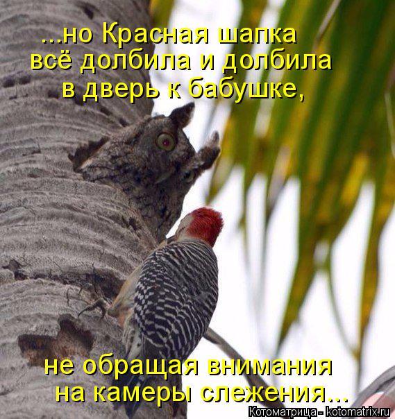 Котоматрица: ...но Красная шапка всё долбила и долбила в дверь к бабушке, не обращая внимания на камеры слежения...