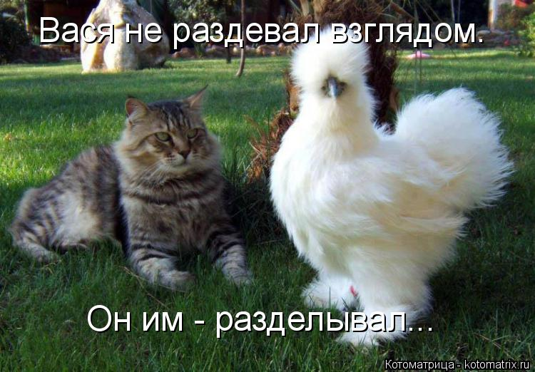 Котоматрица: Вася не раздевал взглядом. Он им - разделывал...