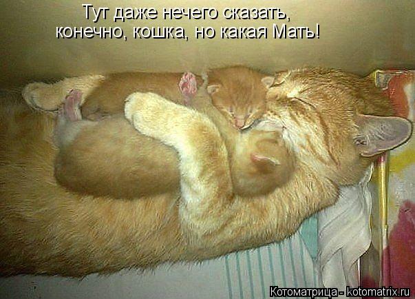 Котоматрица: Тут даже нечего сказать, конечно, кошка, но какая Мать!