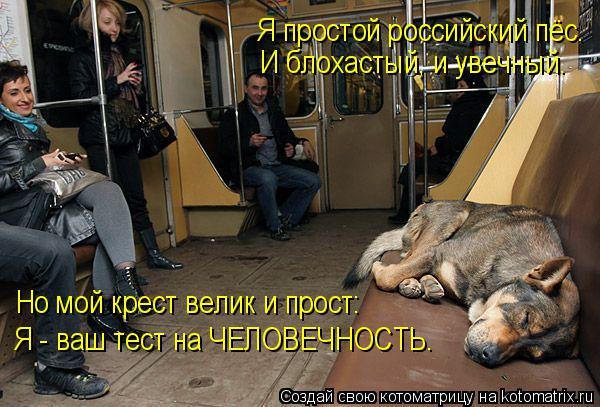 Котоматрица: Но мой крест велик и прост: Я - ваш тест на ЧЕЛОВЕЧНОСТЬ. Я простой российский пёс. И блохастый, и увечный.