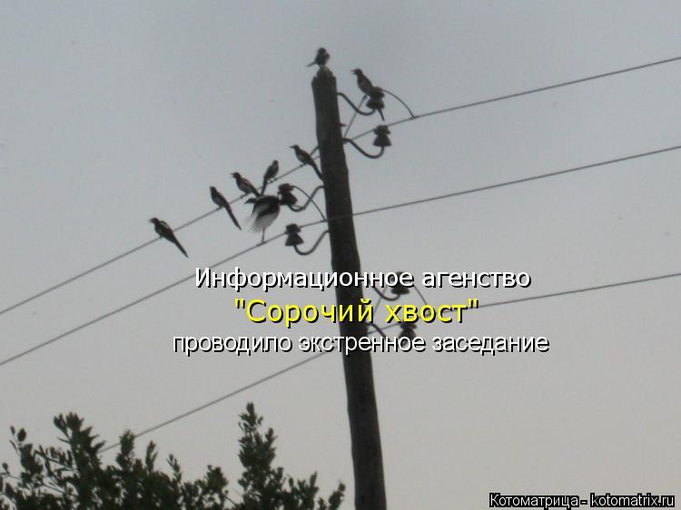 """Котоматрица: Информационное агенство """"Сорочий хвост"""" проводило экстренное заседание"""