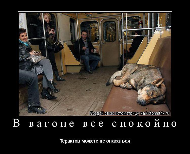 Котоматрица: В вагоне все спокойно Терактов можете не опасаться