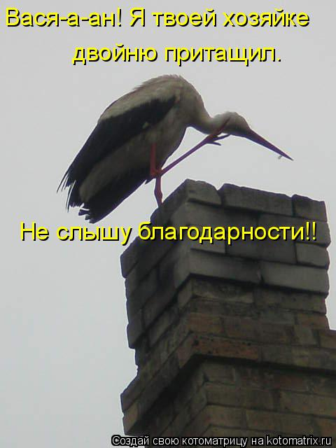 Котоматрица: Вася-а-ан! Я твоей хозяйке  двойню притащил. Не слышу благодарности!!