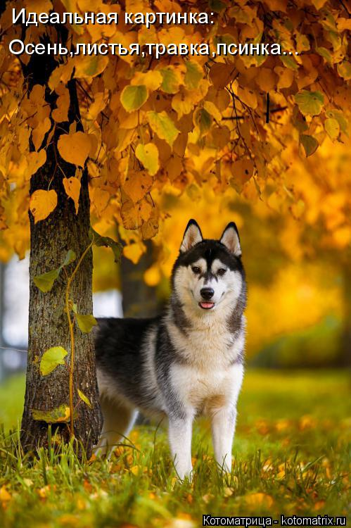 Котоматрица: Идеальная картинка: Осень,листья,травка,псинка...