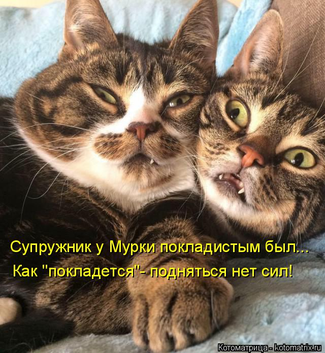"""Котоматрица: Супружник у Мурки покладистым был... Как """"покладется""""- подняться нет сил!"""