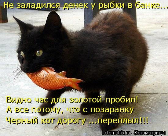 Котоматрица: Не заладился денек у рыбки в банке... Видно час для золотой пробил! А все потому, что с позаранку Черный кот дорогу ...переплыл!!!