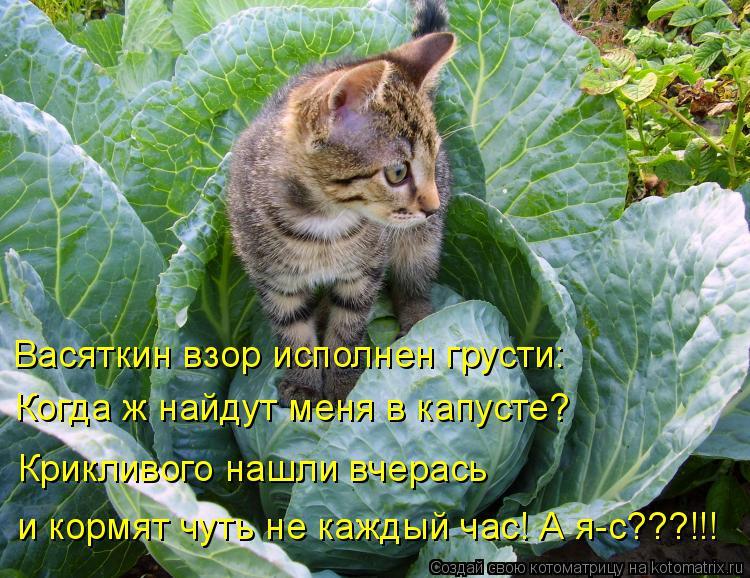 Котоматрица: Васяткин взор исполнен грусти: Когда ж найдут меня в капусте? Крикливого нашли вчерась и кормят чуть не каждый час! А я-с???!!!