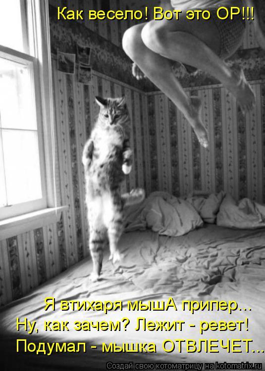 Котоматрица: Как весело! Вот это ОР!!! Ну, как зачем? Лежит - ревет! Я втихаря мышА припер... Подумал - мышка ОТВЛЕЧЕТ...