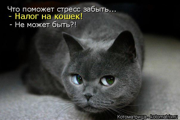 Котоматрица: Что поможет стресс забыть... - Налог на кошек! - Не может быть?!